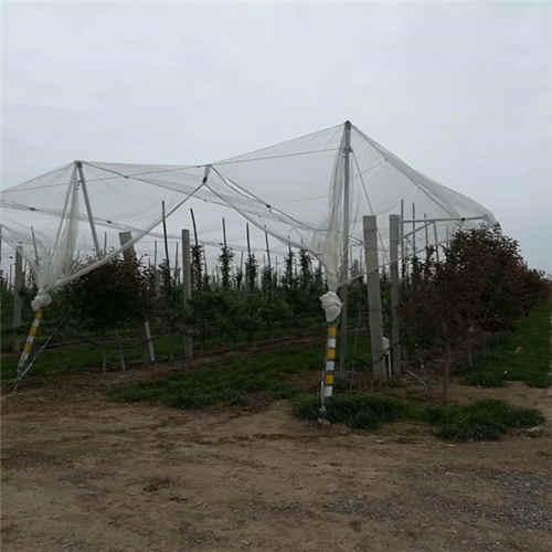 西安果树防雹网杆批发