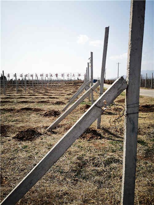 西安果树扶正杆生产