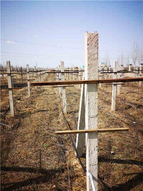 西安葡萄网架杆