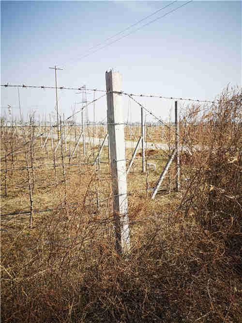 西安果园围杆