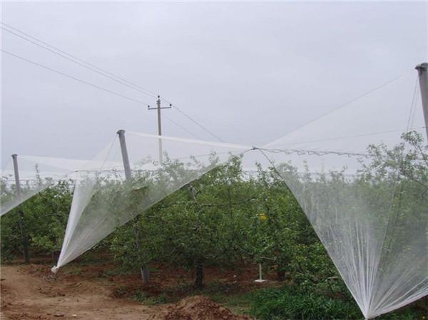 果树防雹网杆