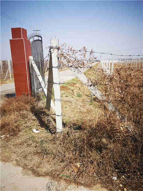 西安果园围栏的重要性随着育民果树材料厂小编一起学习下