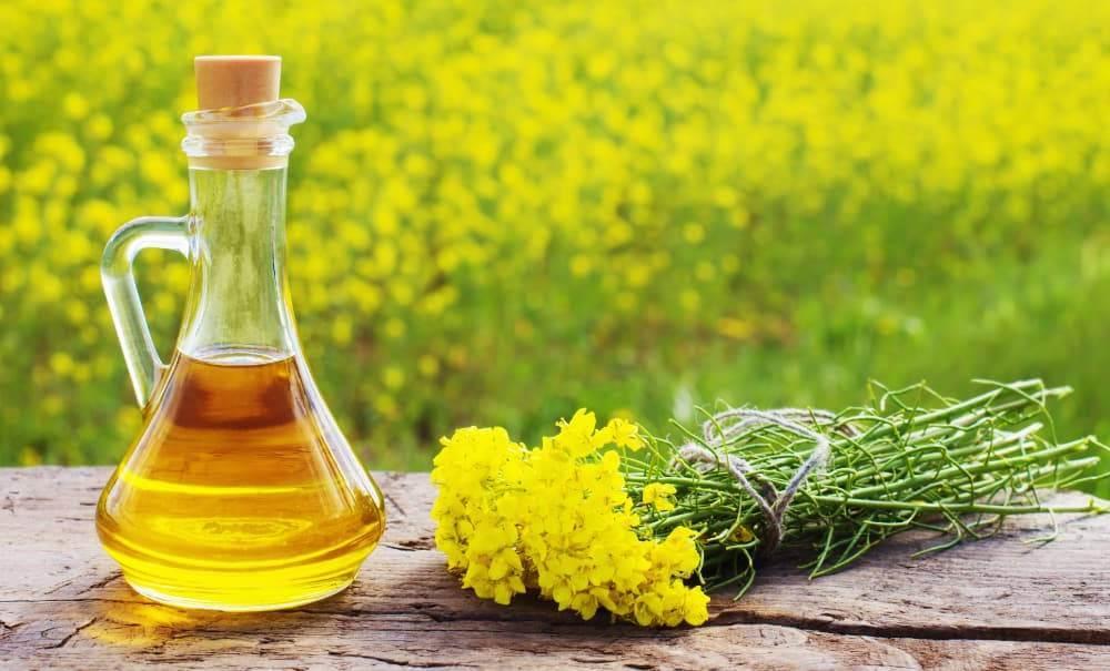 油料油脂加工领域十二项新技术发布 助力行业发展