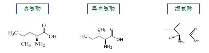 为什么会使用支链氨基酸(BCAA),适用哪些人群?