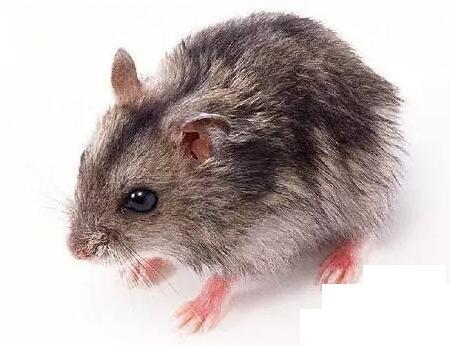 老鼠药批发厂家