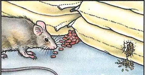 防鼠灭鼠知识分享