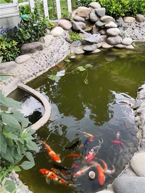 赛德清鱼池过滤器价格