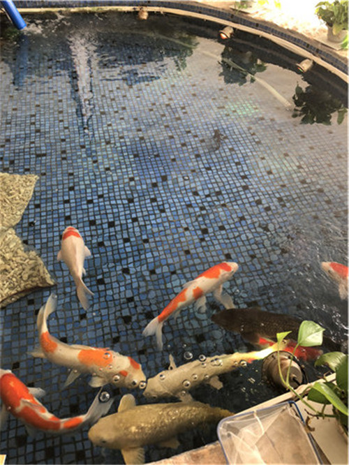 水质不好,可能是因为使用的锦鲤鱼池过滤器不对!