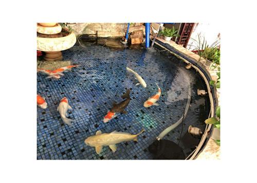 庭院鱼池过滤器厂家