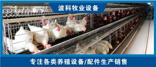 层叠式蛋鸡笼厂家