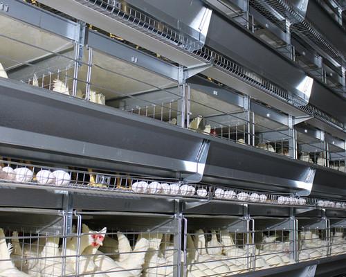 使用层叠式蛋鸡笼应注意的几个方面