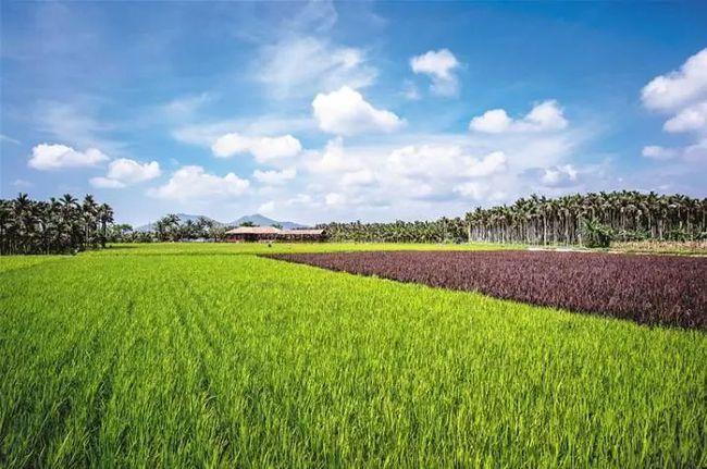 乡村特色产业政策频出,金融支持力度加强