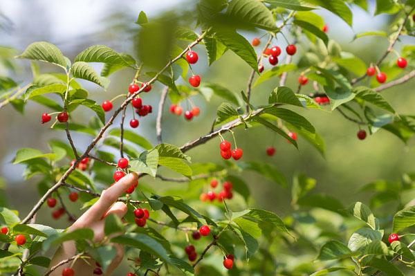 走向我们的小康生活|果树连片 村民致富