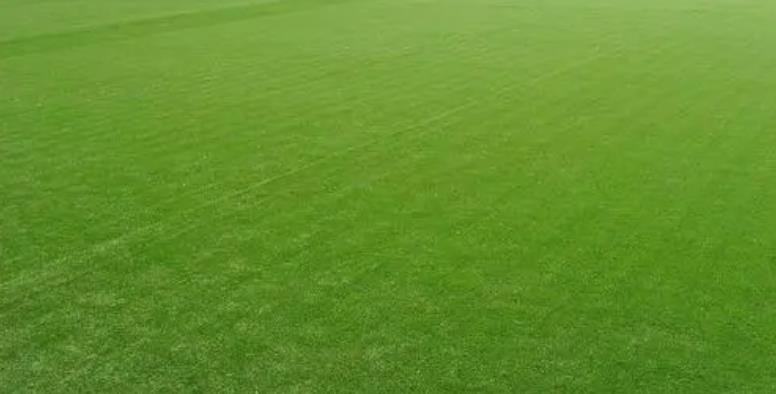 給大家分析一下人造草坪的分類都有哪些呢?
