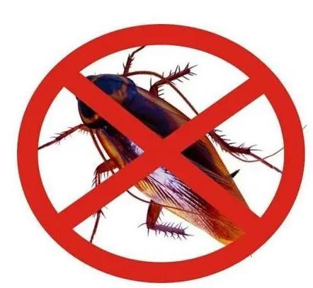 张家口灭蟑螂需要知道的知识大全