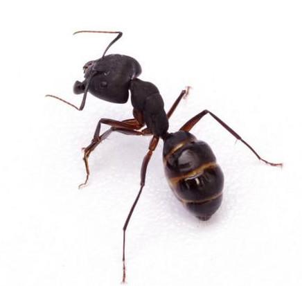 白蚁有何特点?想消灭白蚁就要了解特性!
