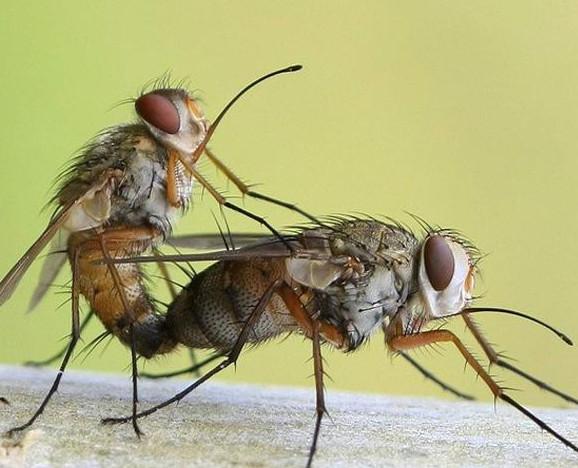 7种科学灭蝇小方法,不会的请赶紧收藏!