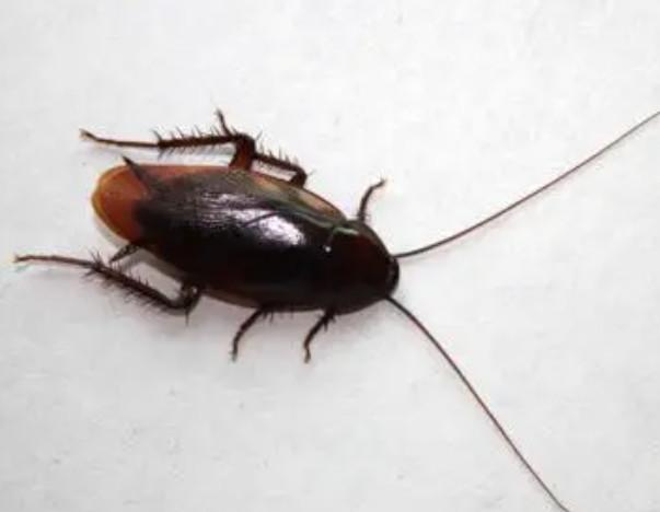 工厂灭蟑螂都有哪些方法?