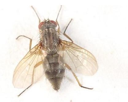 如何控制苍蝇?张家口灭蚊蝇公司有办法!