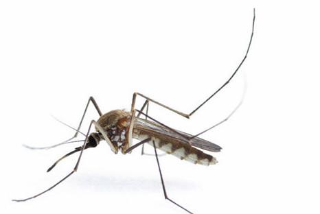 张家口灭蚊公司教你不受蚊子的困扰及叮咬!