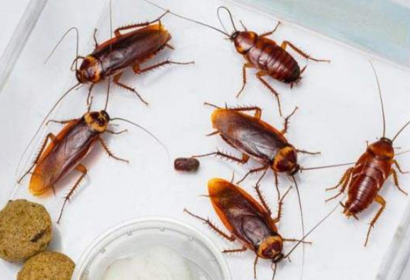 蟑螂是怎么进入家里的?防制蟑螂进入家里的三个方法!