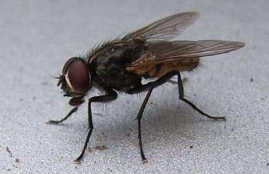 张家口灭蚊蝇公司分享蝇类的生活习性介绍!