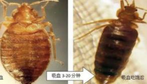 蚊虫的生活史及习性有哪些?