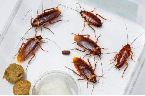 厨房有蟑螂,9个消灭它的方法!
