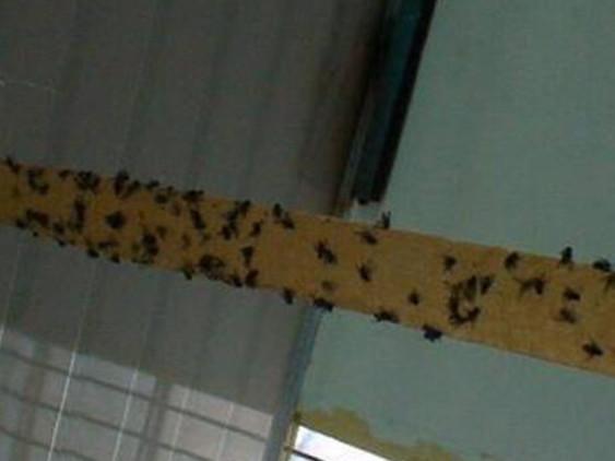工厂灭蚊蝇8个防护措施