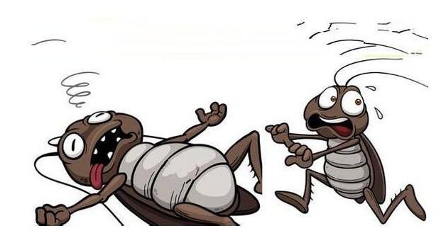 学校食堂的蟑螂怎么消灭?如何预防蟑螂呢?