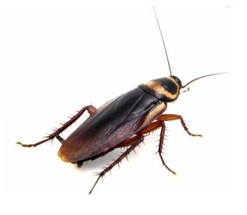 """消灭蟑螂就是要""""斩草除根"""""""