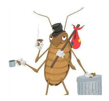 为什么蟑螂不能踩死?三个原因告诉你!