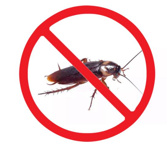 消灭蟑螂常见的五个方法