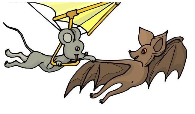 蝙蝠和老鼠为什么看起来像?张家口灭鼠公司告诉你!