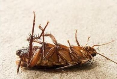 做到这两点,可使用蟑螂不再爬床!