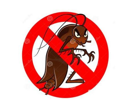 蟑螂怕光么开灯睡觉管用么