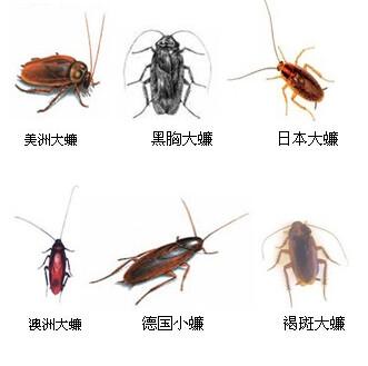 张家口灭蟑螂等害虫的步骤!