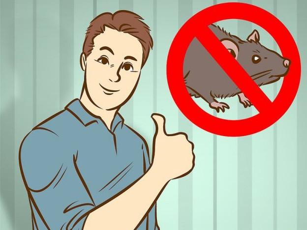 采用器械灭老鼠的四个方法