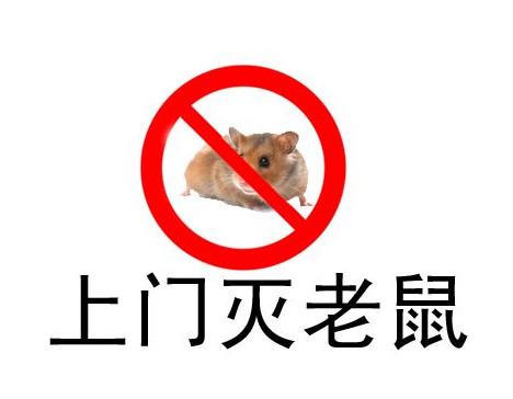 灭鼠应须知的小常识