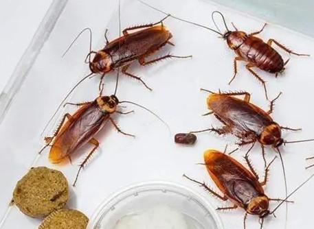 4个消灭蟑螂的小妙招