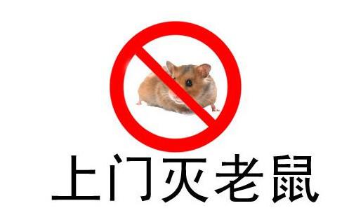 张家口灭鼠的四个安全措施