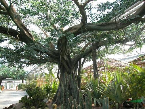生态园假树