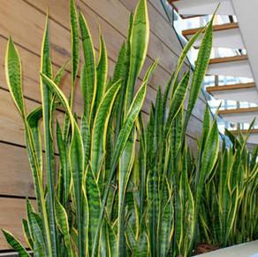 樓梯間綠植擺放案例