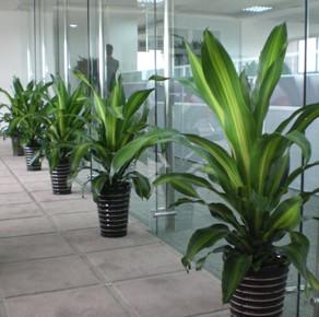辦公區綠植租擺案例