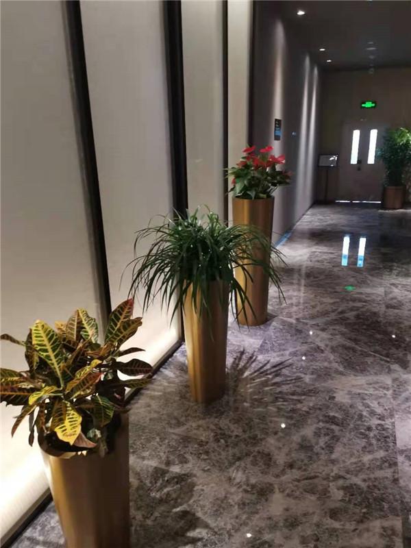 酒店綠植租擺服務