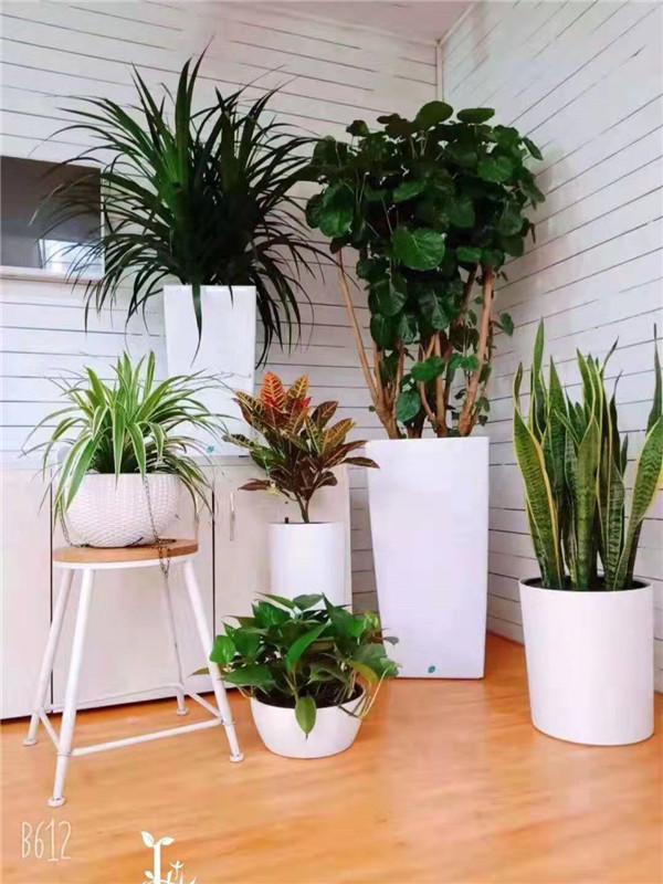 办公室绿植摆放一定要讲究风水,快来学习吧!