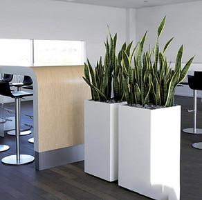办公室绿植的作用有哪些?和小编一起了解吧。