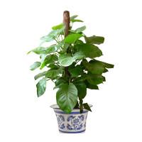 小编给大家推荐一些好养的绿植,收藏起来吧!