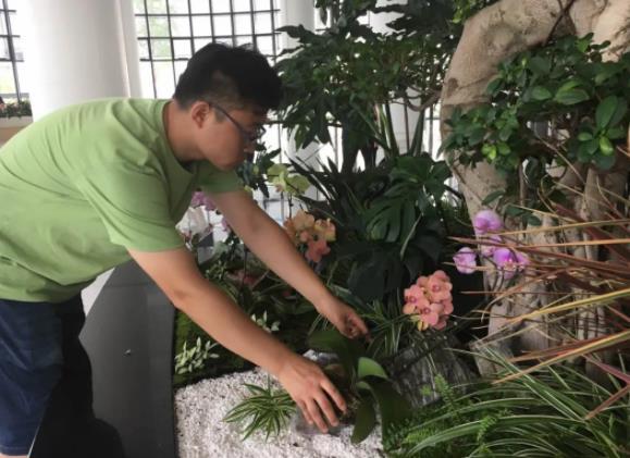 聚丰巢花卉租赁业务领域有哪些?