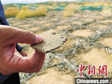 生物矿化固沙技术在国内..应用